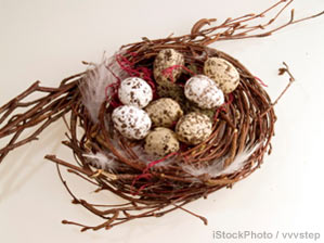 When Children Return to Empty Nest (Photo of bird's nest)